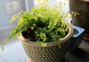 spring plant