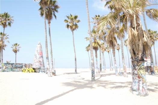 palms1