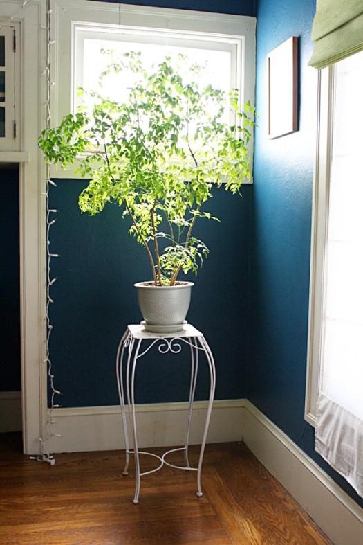 plant2.2